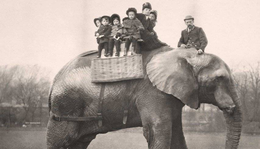 "El lado oscuro de ""Dumbo"" que Disney omitió"
