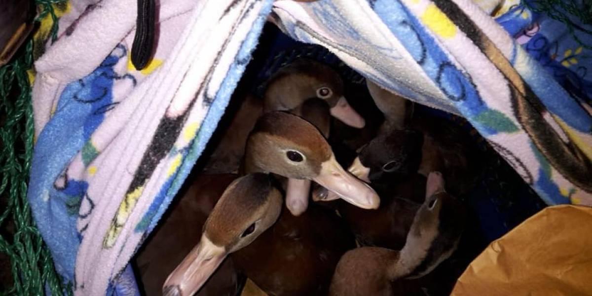 Tres detenidos por transportar especies en protección