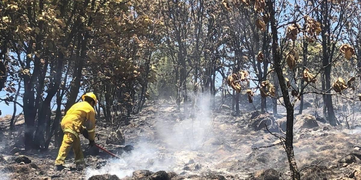 Sofocan finalmente incendio en Bosque de La Primavera
