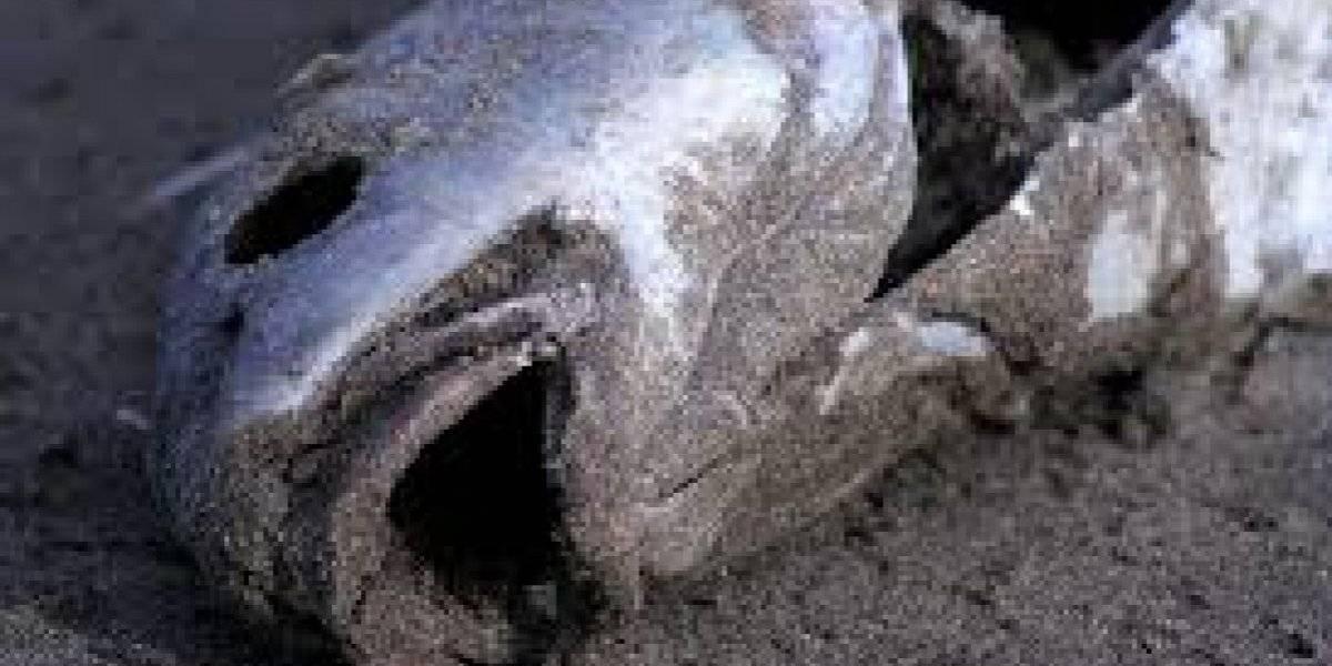 Exigen al DRNA identificar contaminación que elevó muertes de peces en lago de Cidra