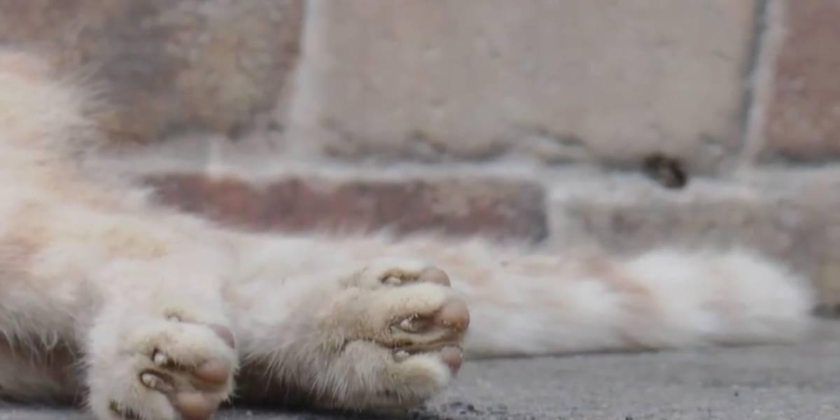 Gato muere tras aberrante caso de abuso sexual