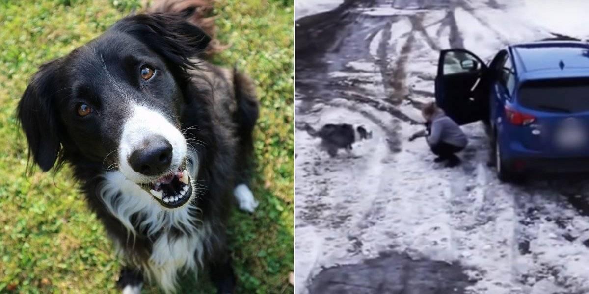 Gravam momento impressionante em que cachorro salva seu melhor amigo de atropelamento