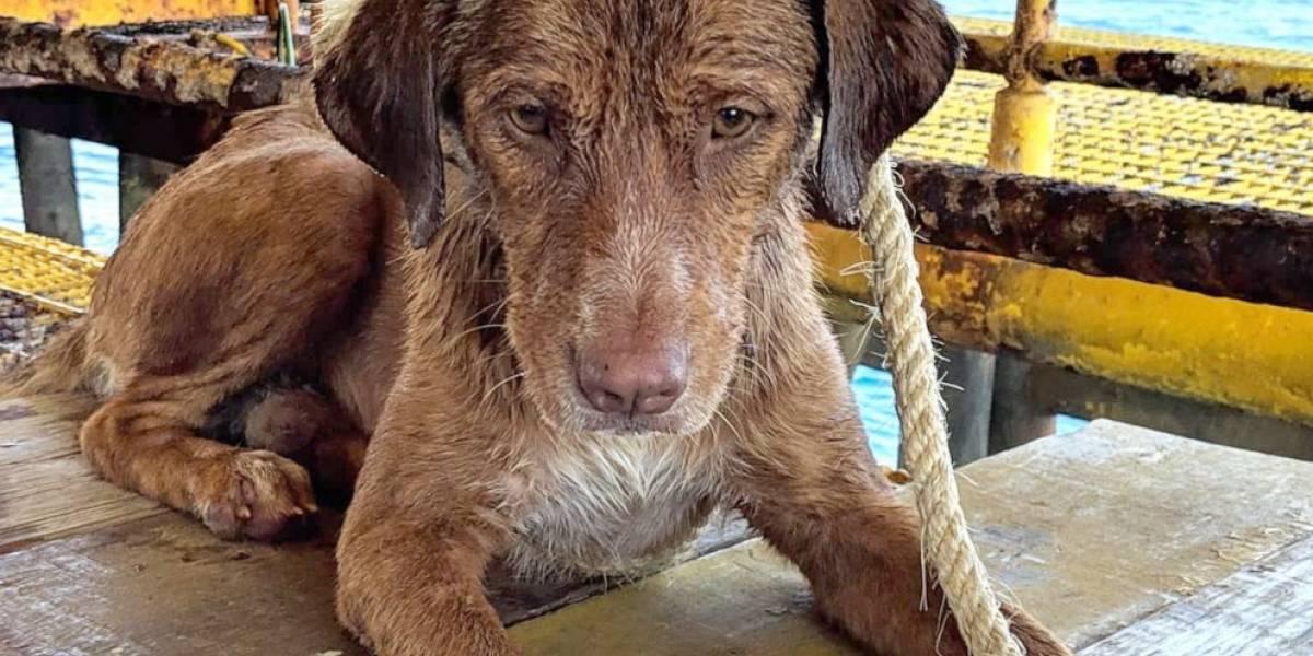 Cão é encontrado nadando a 220km da costa da Tailândia