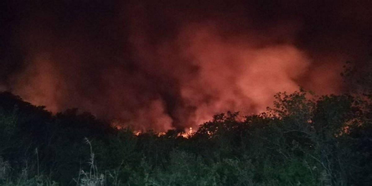 Incendio en reserva de Los Petenes devasta 300 hectáreas de vegetación