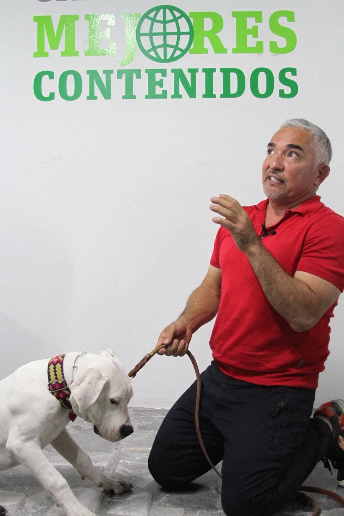 César Millan explicó que la calma y el respeto son dos puntos fundamentales para una convivencia armónica entre perros y humanos Foto: Axel Amézquita