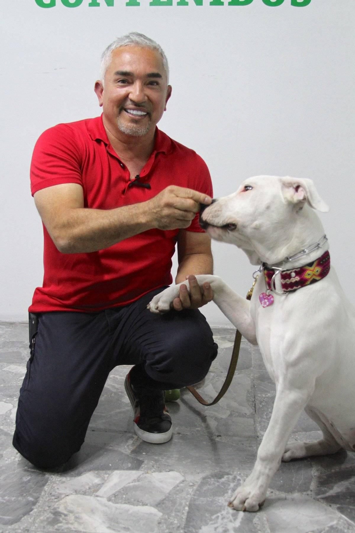 César Millán mencionó que lo más importante para integrar a un perro en tu hogar es poner límites con el fin de que entienda en qué lugares debe estar dentro de la casa. Foto: Axel Amézquita