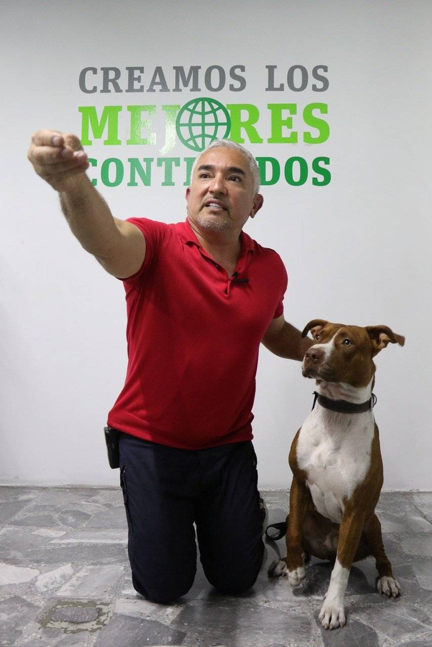 El perro por naturaleza sabe seguir, jugar y explorar y es muy importante que nosotros nutramos esa parte de ellos: César Millan Foto: Nicolás Corte