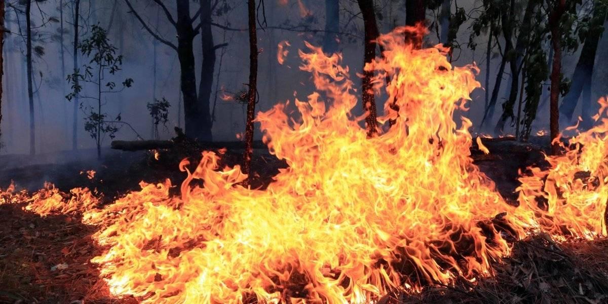 Actualmente hay 79 incendios activos en el país: PC