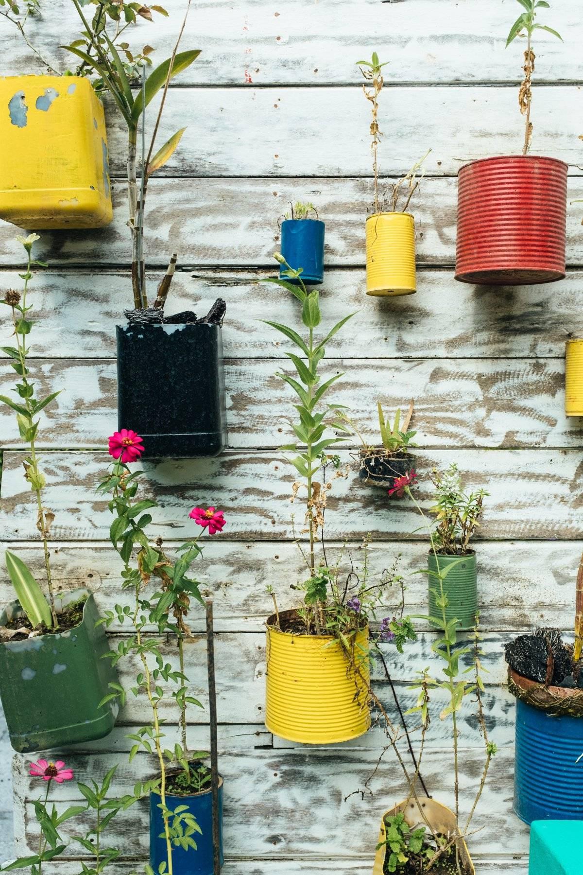 Reciclar plantas