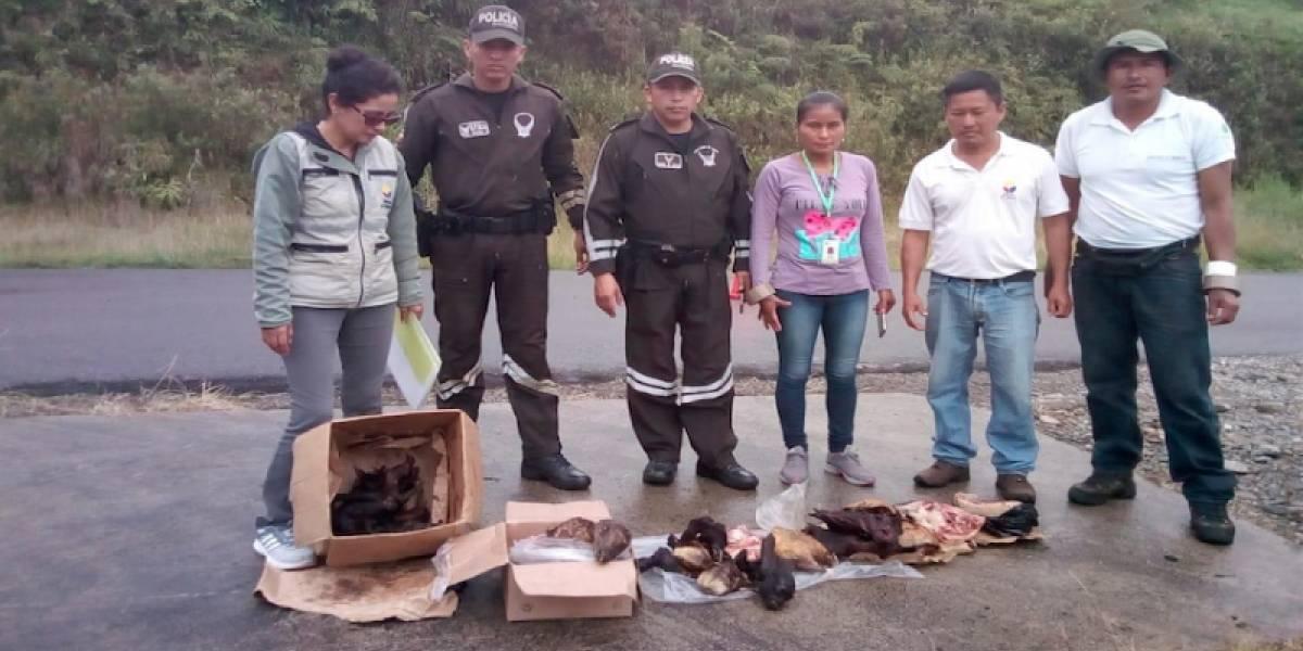 Persona que portaba 40 libras de carne silvestre en peligro de extinción será sancionada
