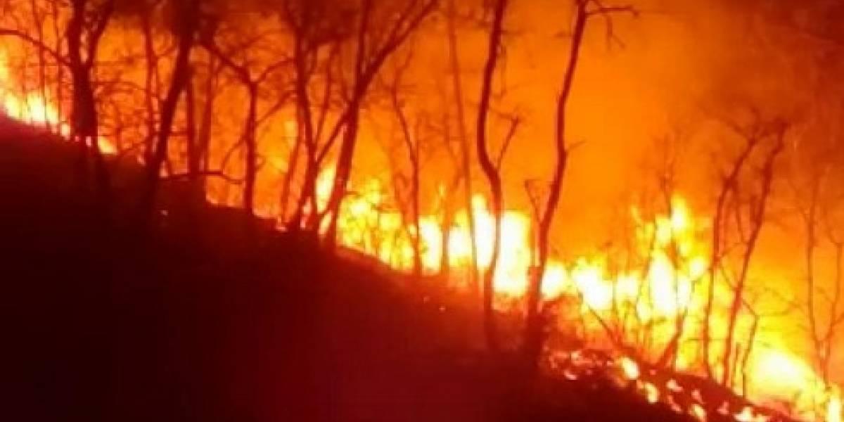 Incendios forestales han arrasado con 47 mil hectáreas de bosque en el país