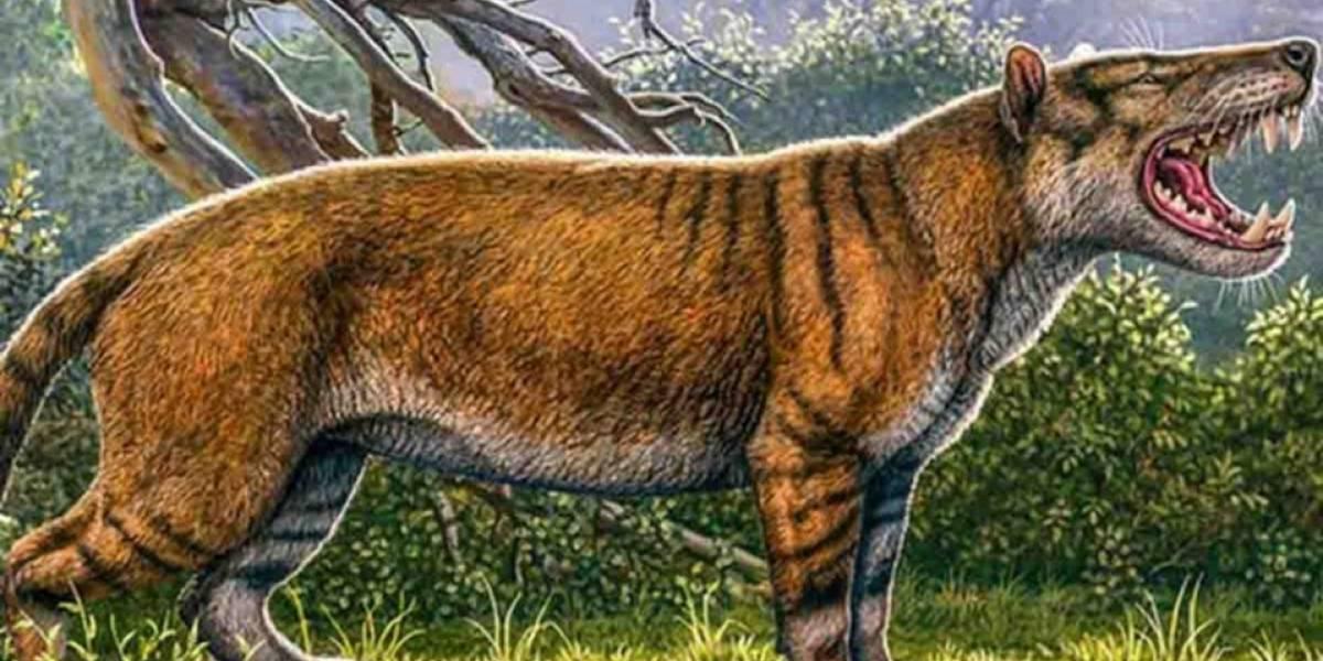 El Gran León Africano: Descubren a este nuevo animal prehistórico de 22 millones de años