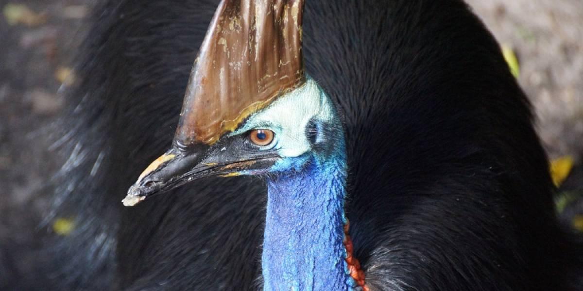 El pájaro exótico que mató a su dueño en EE. UU. será subastado