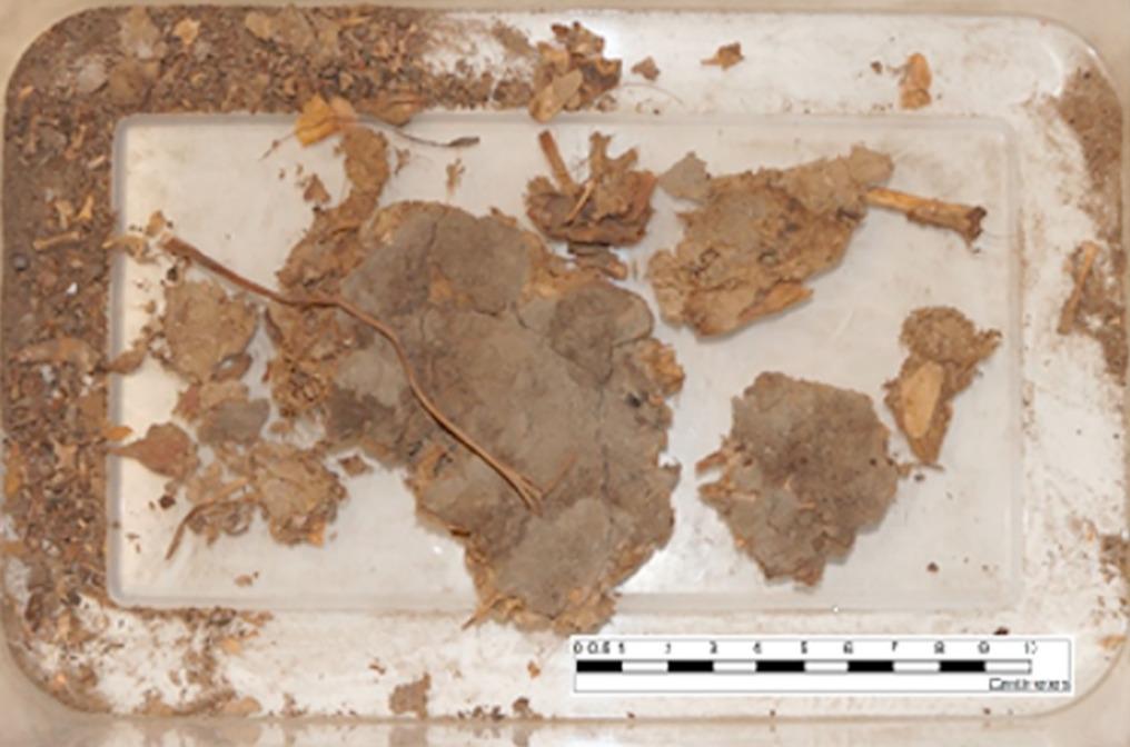 Insólito: Fósil humano muestra que hombre antiguo se comió serpiente de cascabel completa