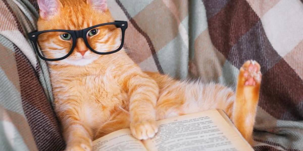 Ya existen las escuelas para entrenar a los gatos en México