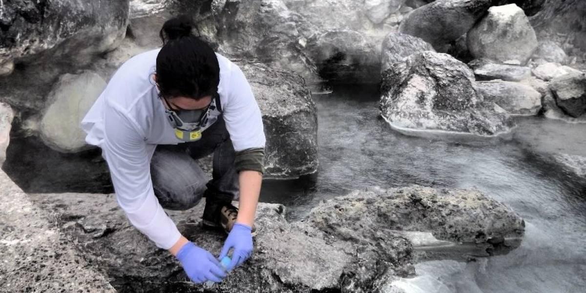 Científicos ecuatorianos crean torres con algas para reducir contaminación por CO2
