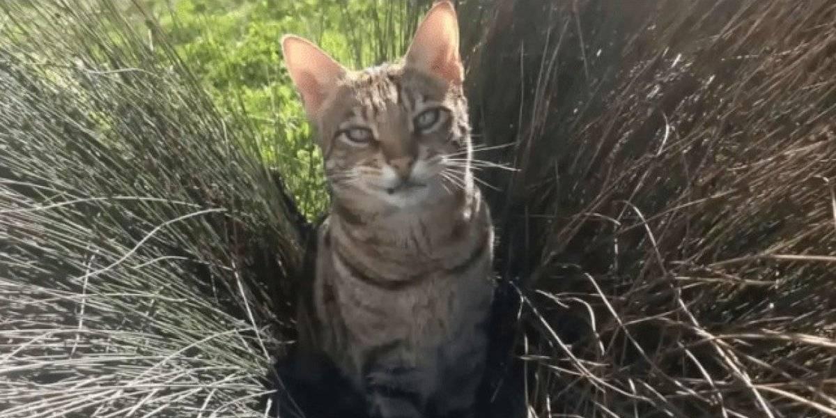 Animal recebe título de 'gata mais perigosa da América' após ter problemas com a polícia 30 vezes
