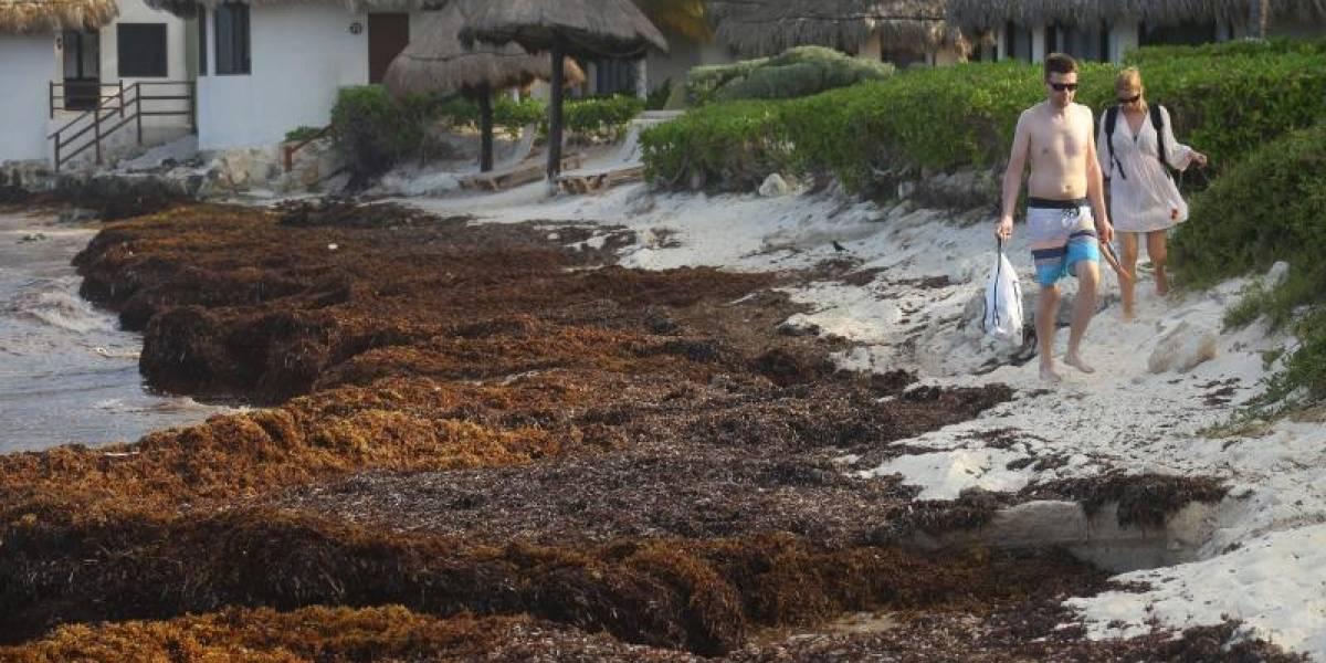 Buques de la Marina llegan al Caribe para combatir el sargazo