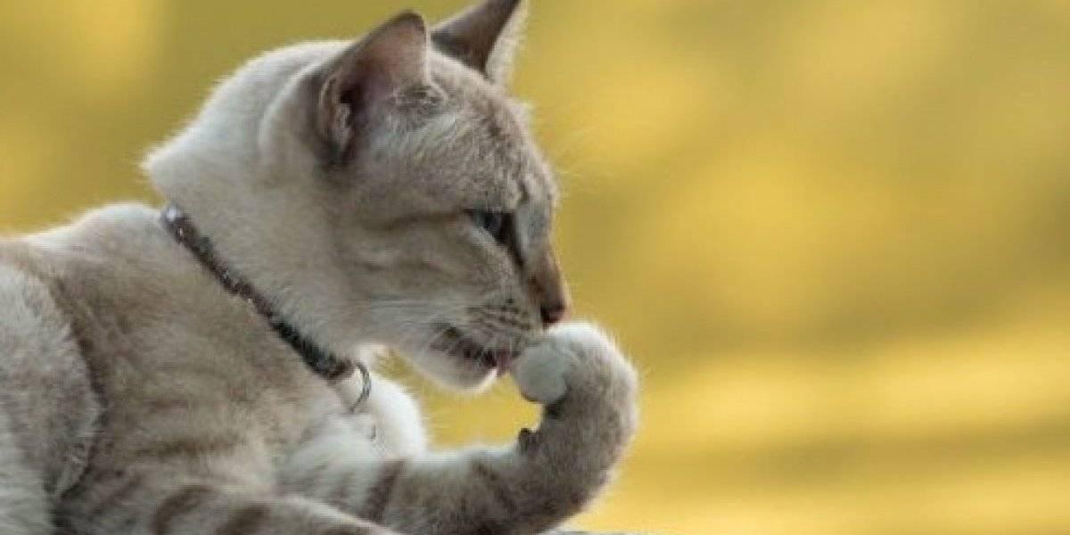 Gato ataca a un policía en cuartel de Barrio Obrero