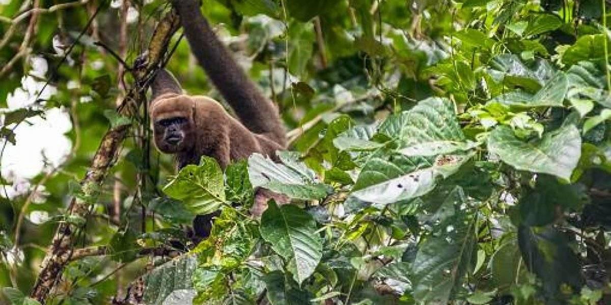 Deforestación destruye 80 000 hectáreas anuales en la Amazonía, según exministro de Ambiente