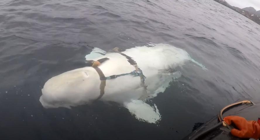 Un ejemplo: Aplican millonaria multa a empresas rusas que habían encerrado Orcas