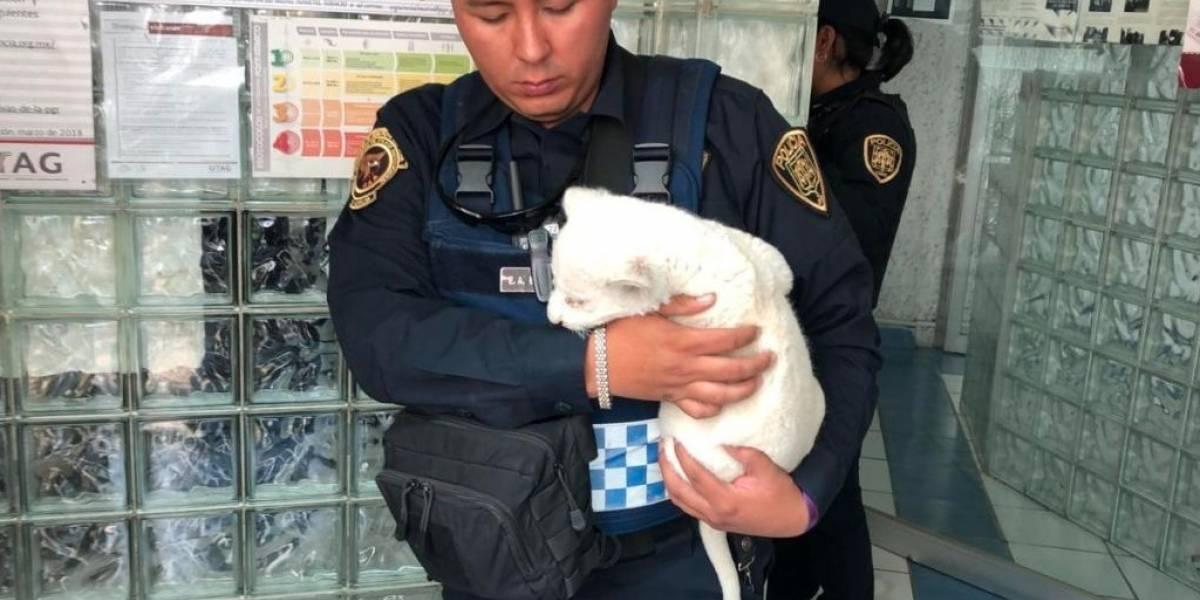 Policías detienen a BMW sin placas y descubren a cachorro de león africano