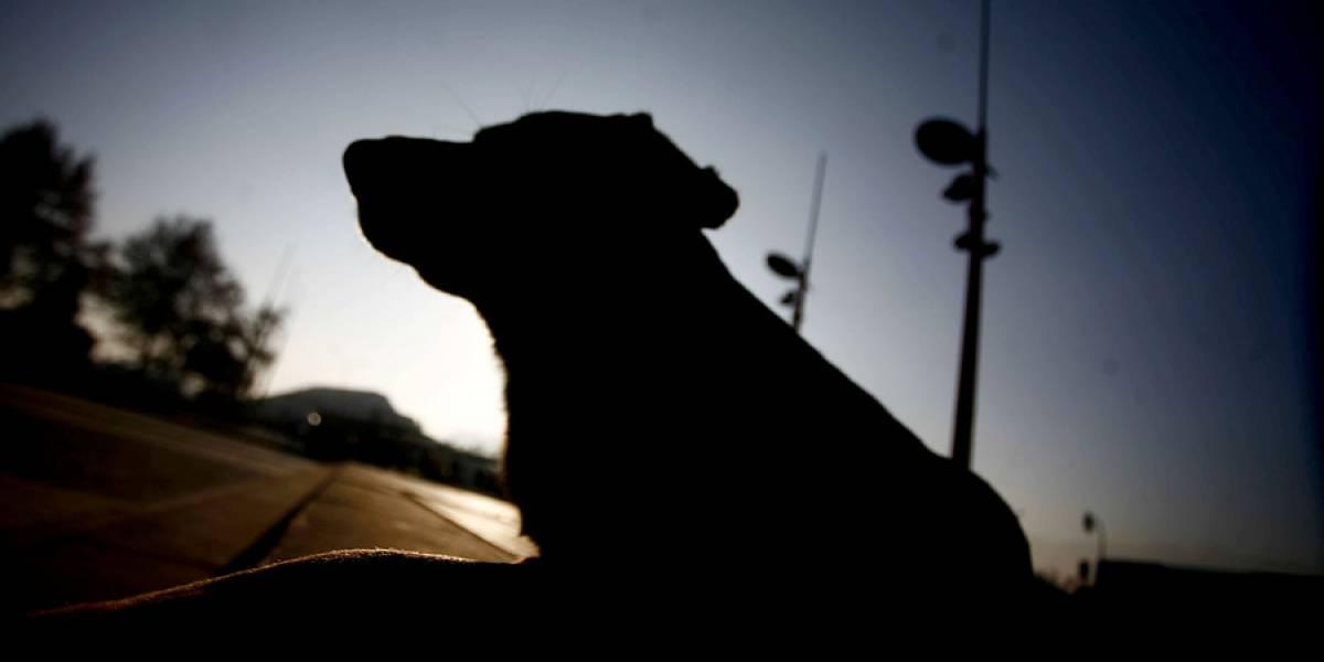 Brutal ataque a perra conmociona a México: la clavaron a una madera, cortaron sus ojos y amarraron su hocico con alambres