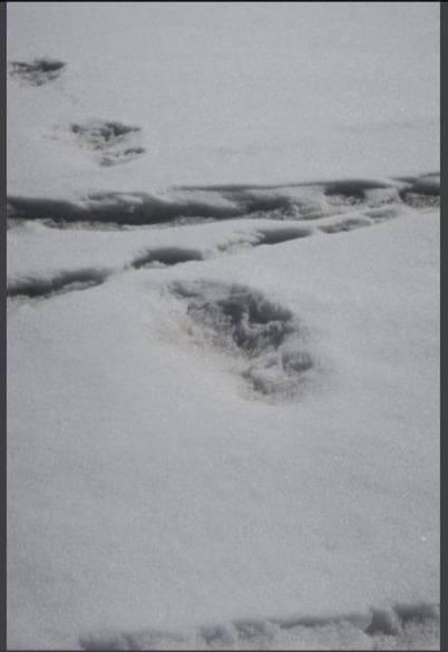 Increíble: Ejército Indio aseguró haber encontrado huellas reales del Yeti