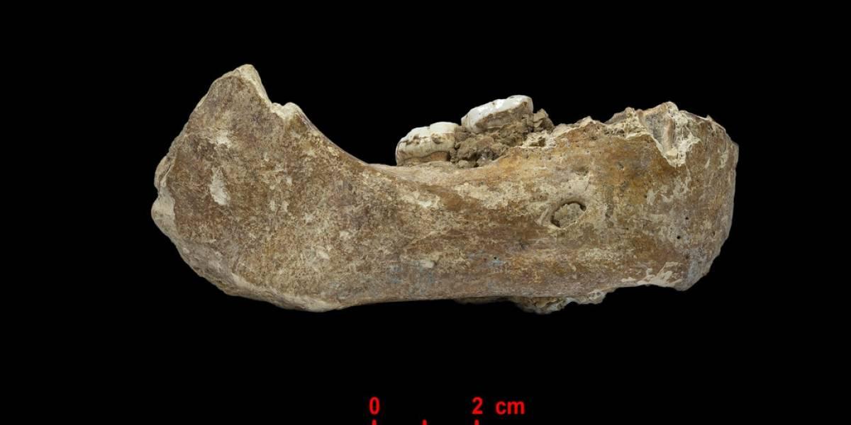 Histórico hallazgo arqueológico: encuentran fósil de misterioso antepasado humano de hace más de 160 mil años en el Tíbet