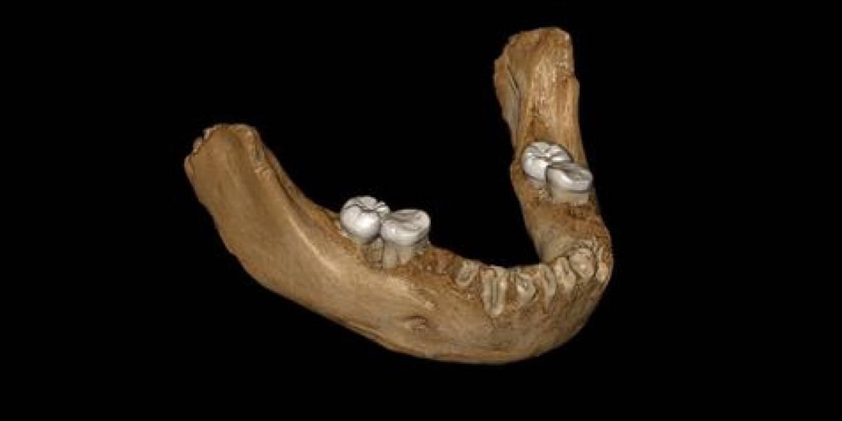 Encuentran fósil de misterioso antepasado humano de hace 160  mil años en el Tíbet
