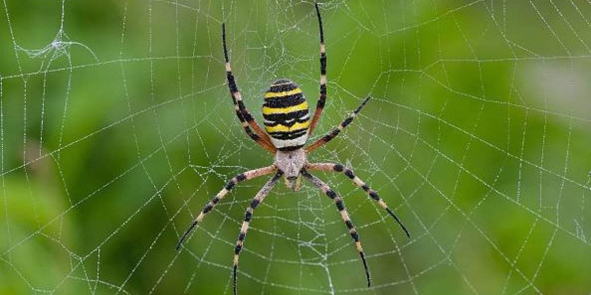 Convierten a las arañas en zombies y las esclavizan: revelan la aterradora y malvada conducta de las avisas que impacta al mundo científico