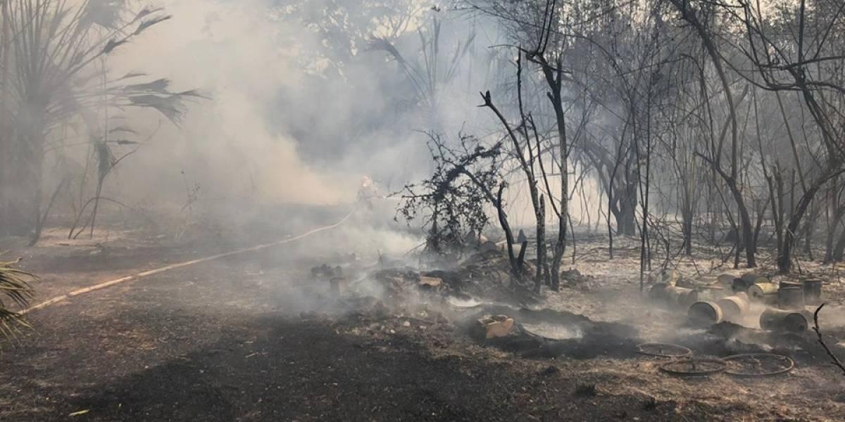 ¡Fauna en riesgo! Varios animales han muerto en incendio forestal en Manchón Guamuchal