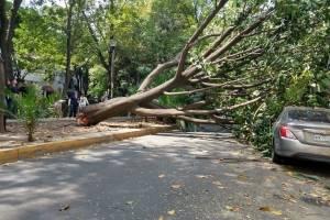Caída de árbol en la Condesa