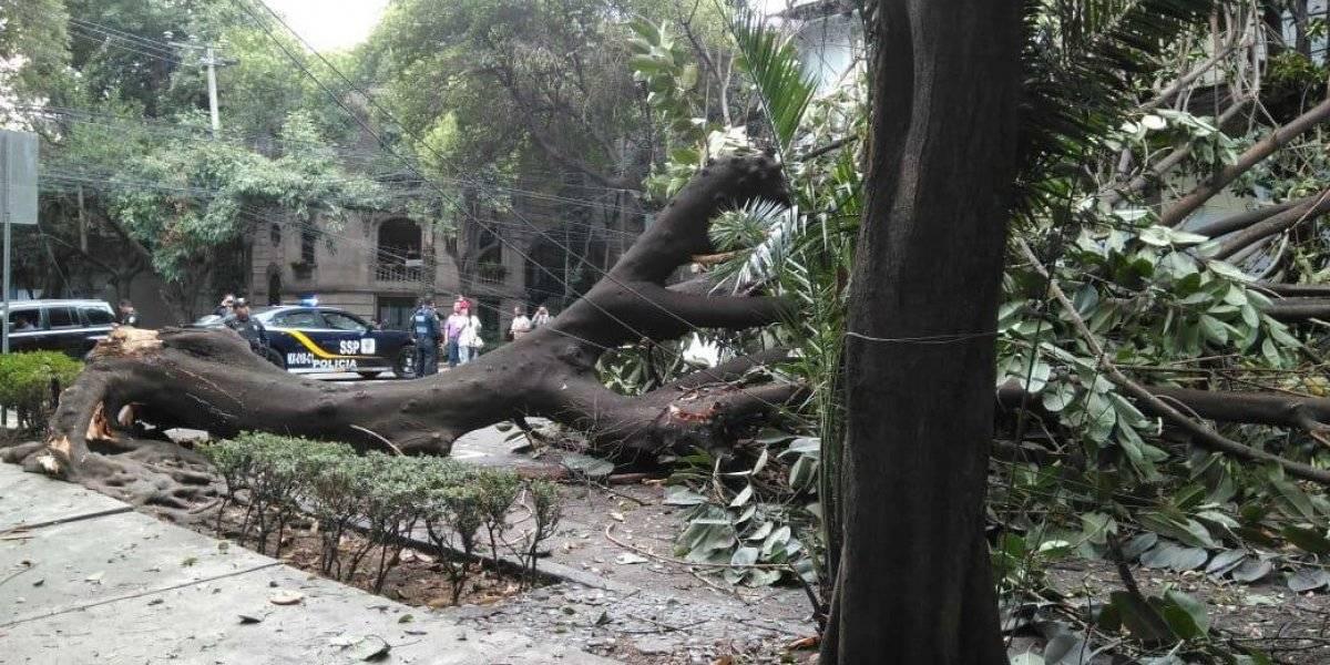 Se registra la caída de al menos 3 árboles en la CDMX