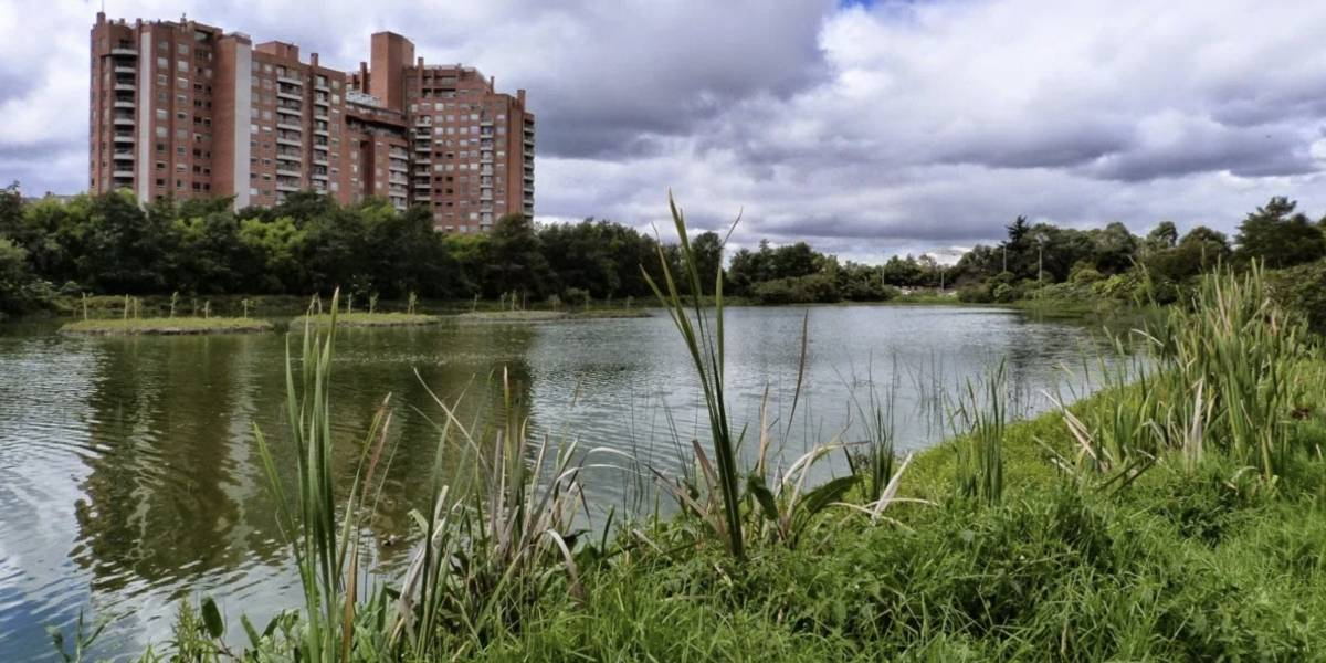 ¿La Alcaldía de Bogotá puede continuar ejecutando obras en los humedales?