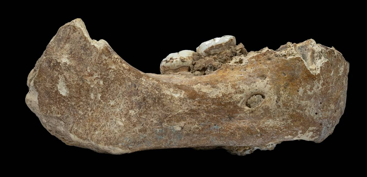 Mandíbula Denisovano
