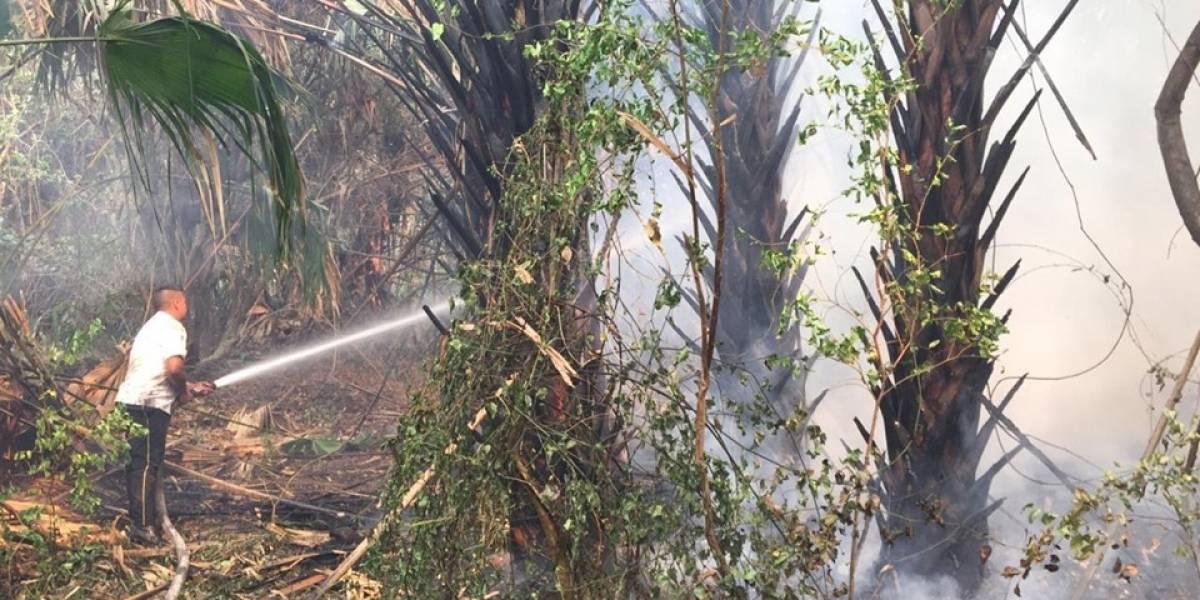 Incendio forestal en Manchón Guamuchal continúa activo