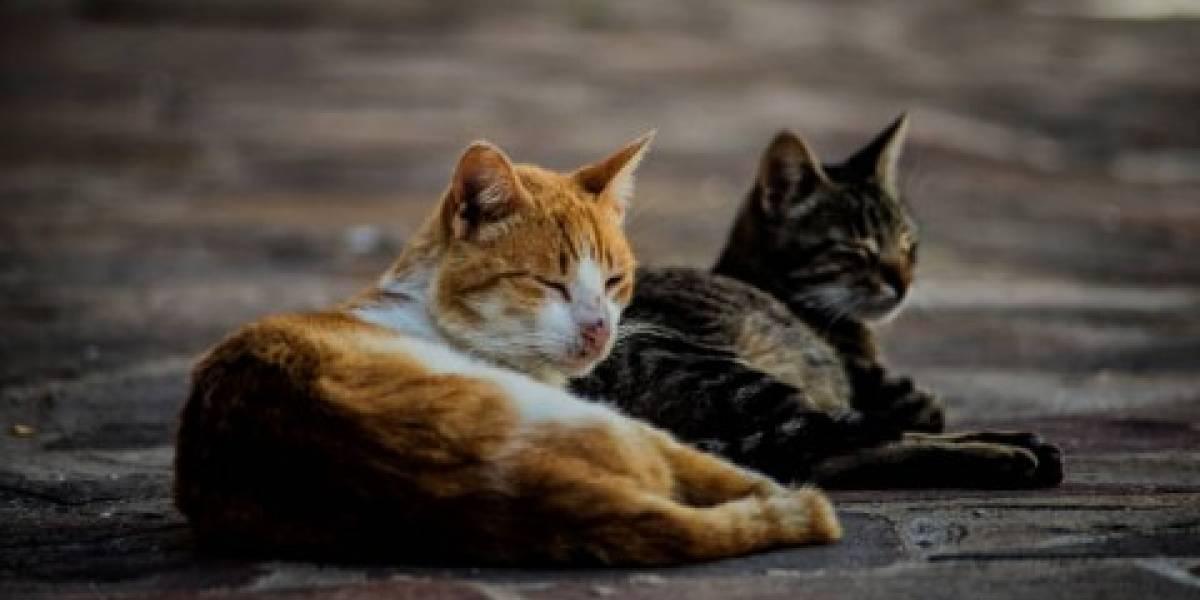 Radican querella por crueldad animal tras encontrar varios gatos muertos en urbanización de San Juan