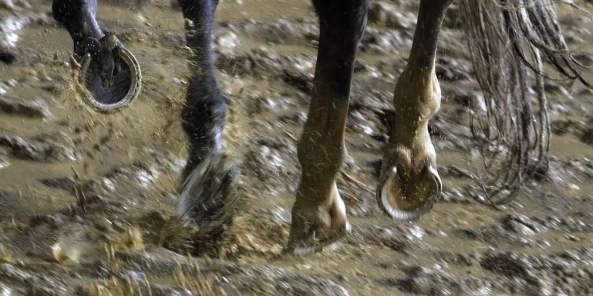 Venden excremento del caballo ganador del Kentucky Derby por $200
