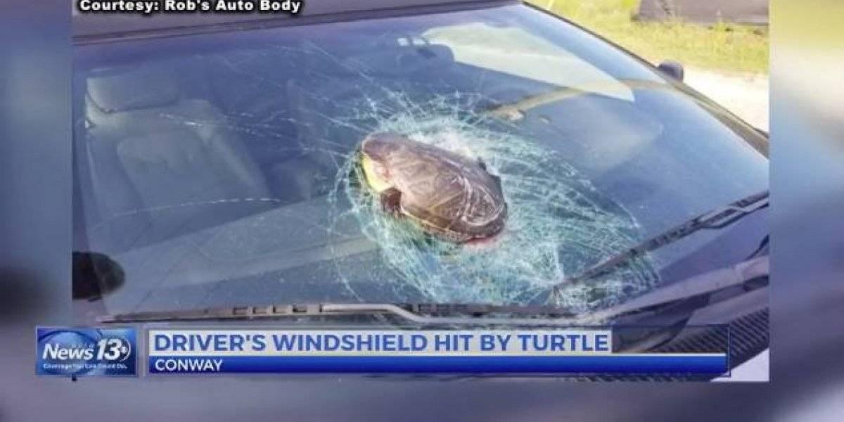Hombre se llevó el susto de su vida luego de que una tortuga apareció volando y destrozó el parabrisas de su auto