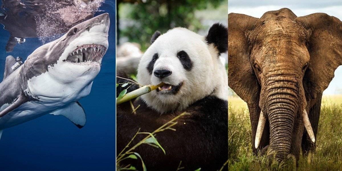 Las especies que podrían extinguirse por culpa de los humanos