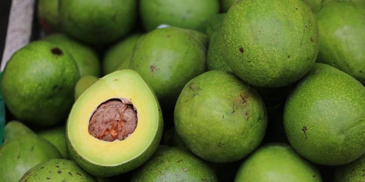 Vitamina de abacate e chá verde: confira a receita detox ideal para começar o dia