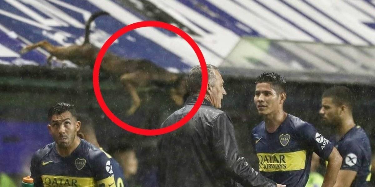VIDEO: 'El perro volador' que acaparó los reflectores en un partido de Boca