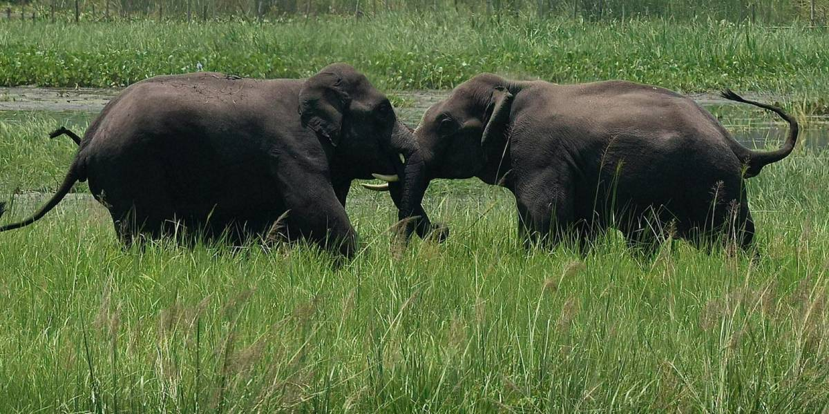 ONU: Los humanos aceleran la extinción de otras especies