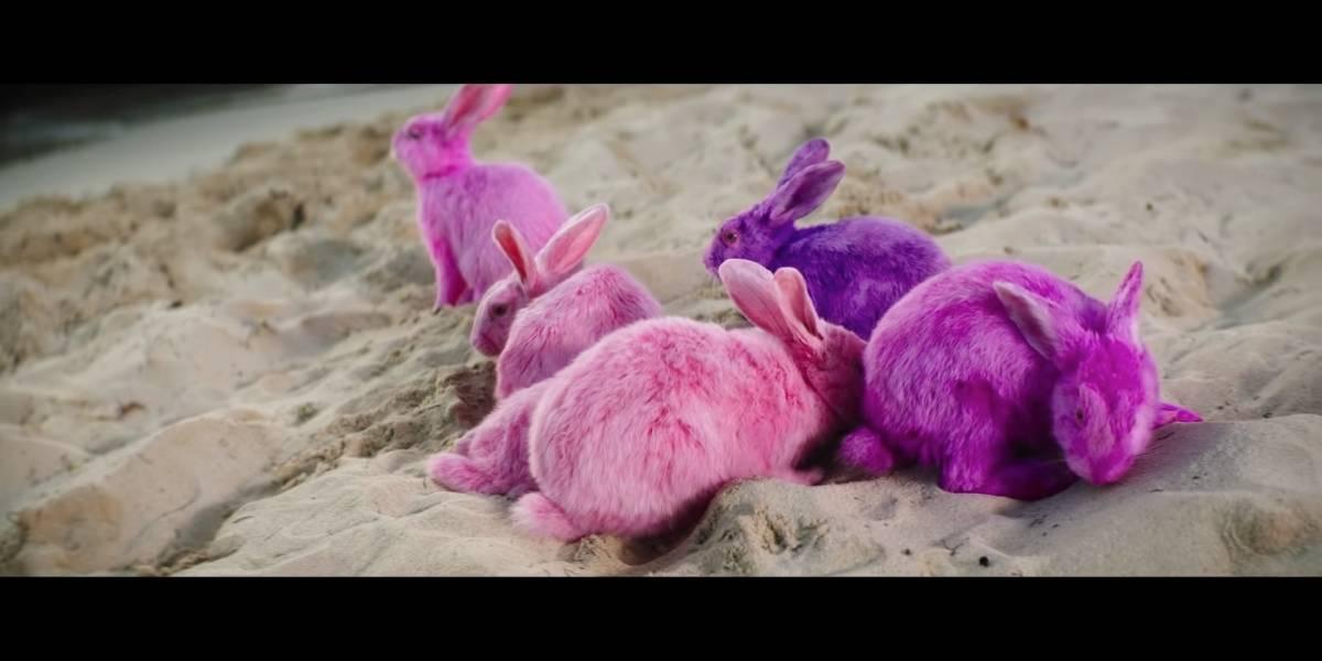 Bad Bunny es acusado de maltrato animal por pintar conejos para un videoclip