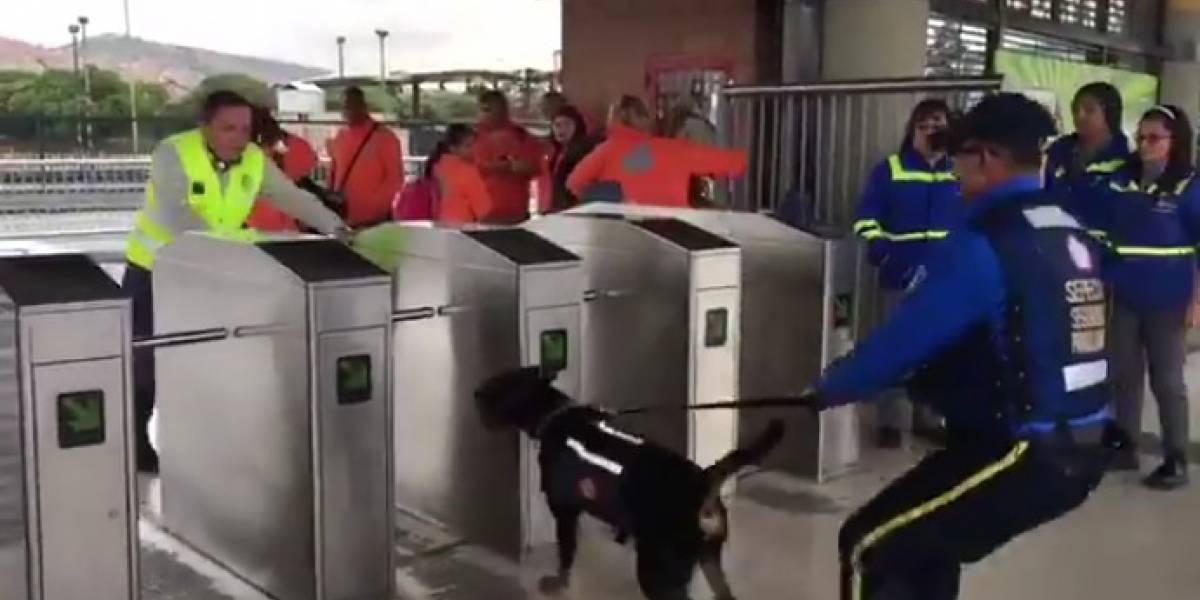 Por video aseguran que perros de seguridad de TransMilenio tratan de atacar a colados