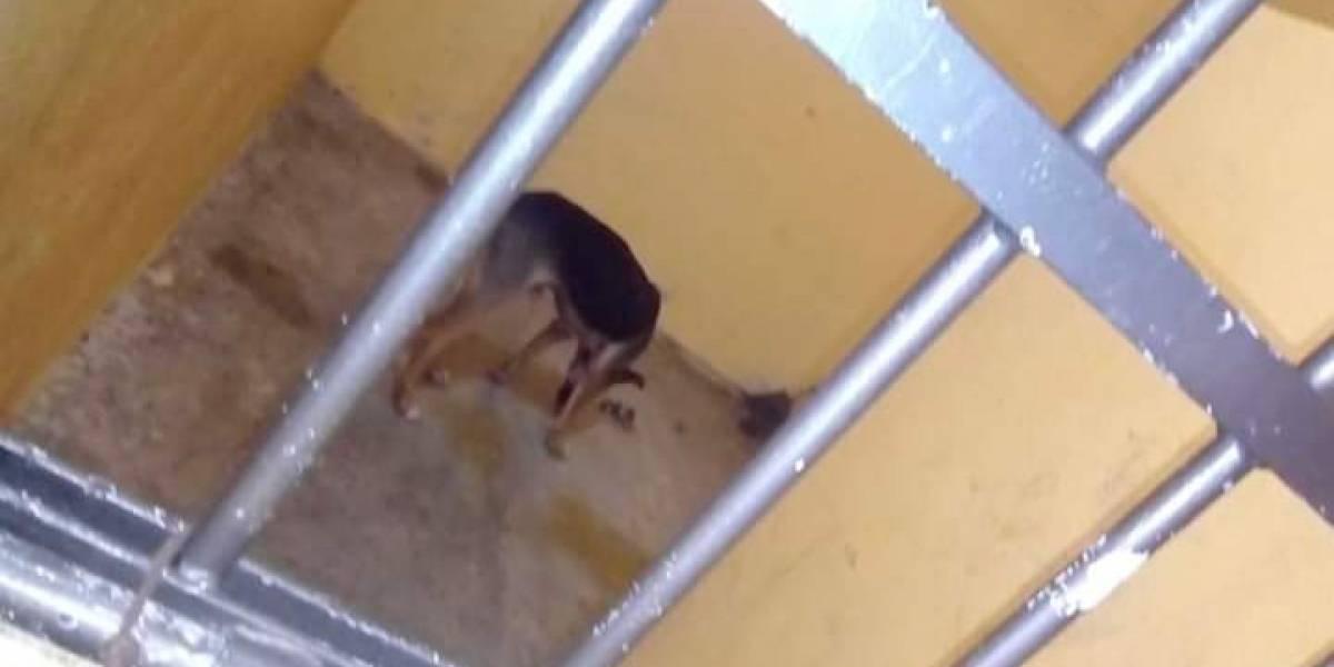 Encarcelan a perro en Oaxaca por morder a una persona
