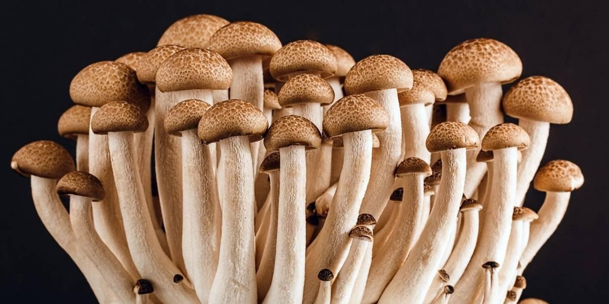 En Denver han realizado una votación para buscar despenalizar los hongos alucinógenos