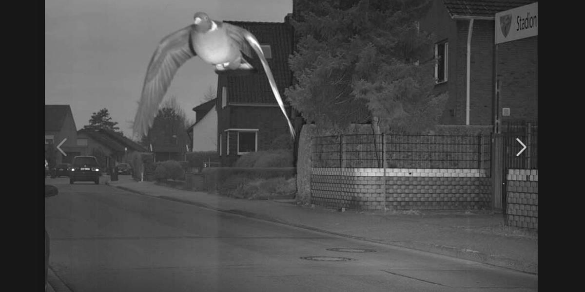 Radar flagra pombo voando em rua acima da velocidade permitida
