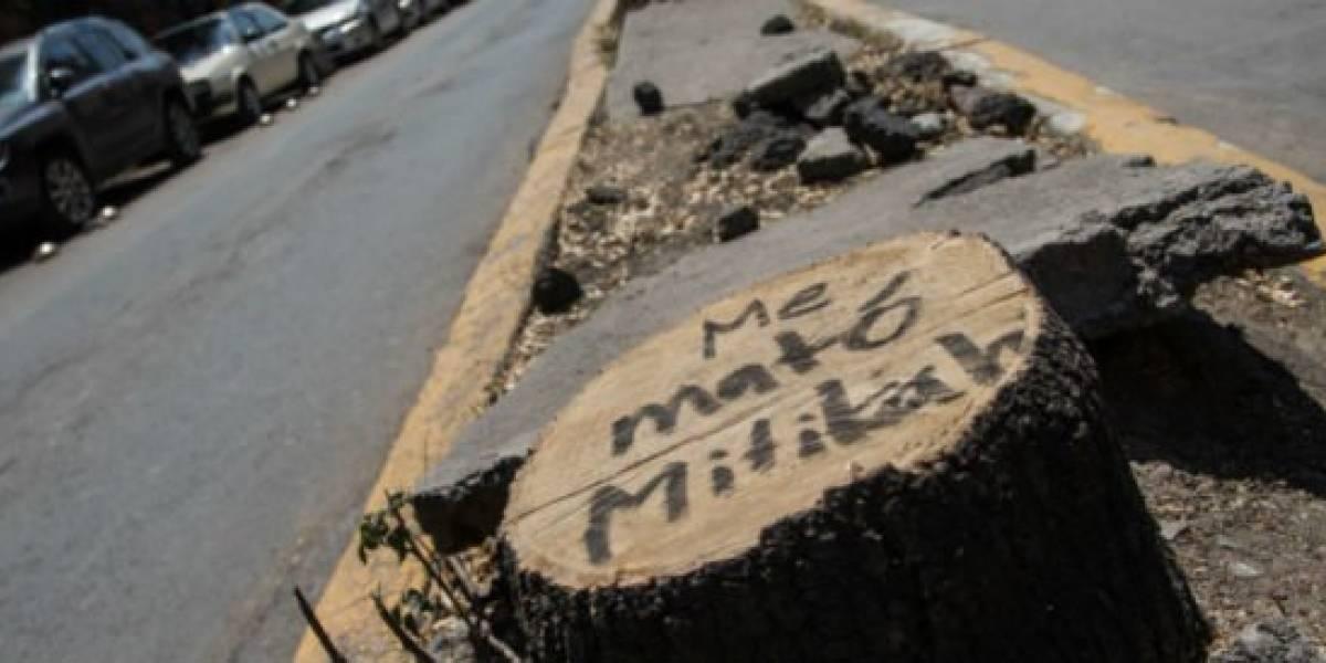 Investigan por dolo a empresa que derribó árboles en Mitikah